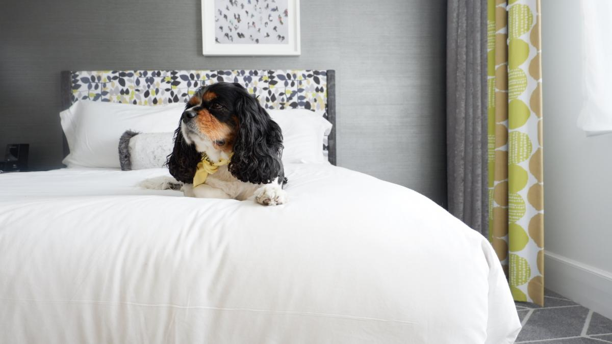 pet friendly places to stay in savannah visit savannahpet friendly places to stay in savannah