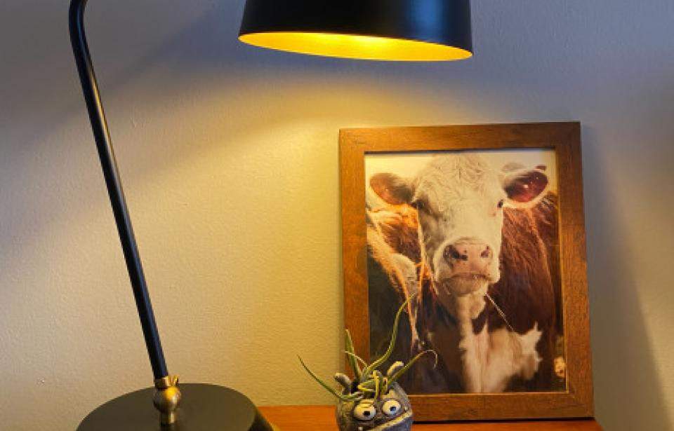 Morning Cow Photo Print