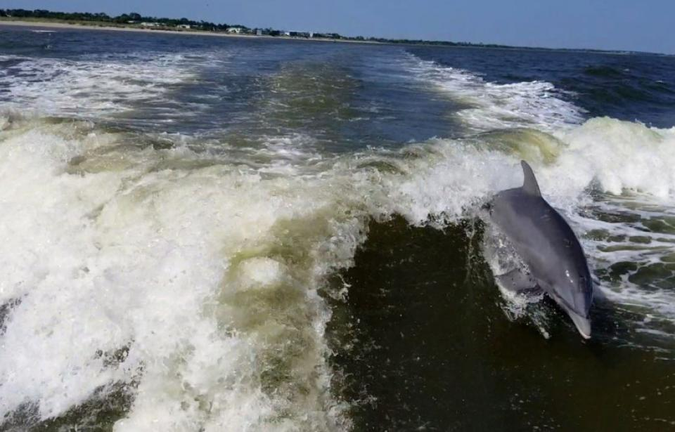 Surfing Dolphins2