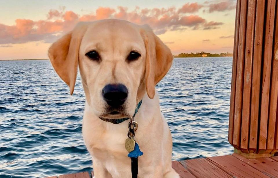 Tybee Guide Dog Deal