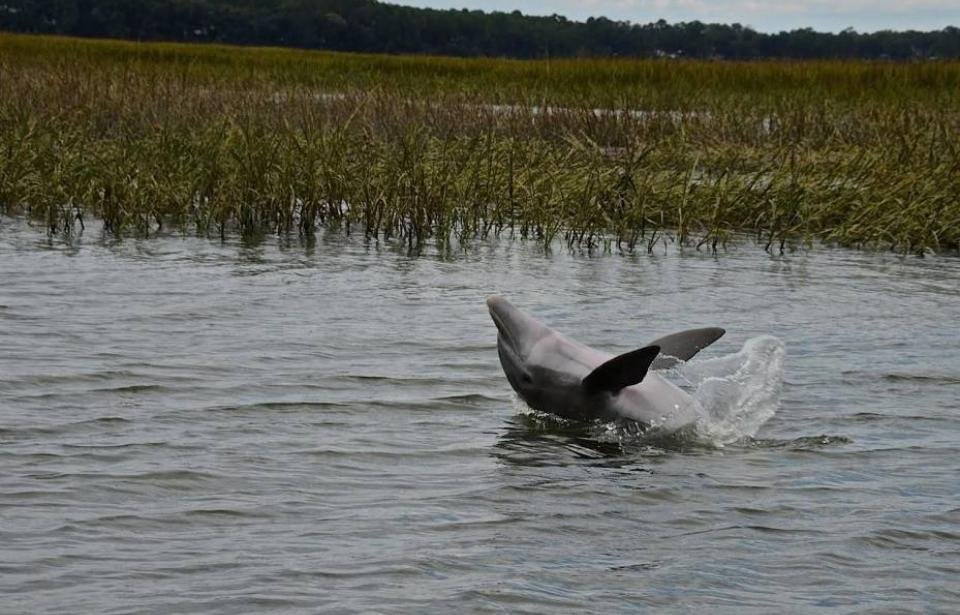 Dolphin - Dolphins are among the many great nature viewing experiences available