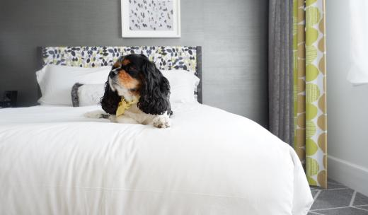 Pet-Friendly Brice Hotel