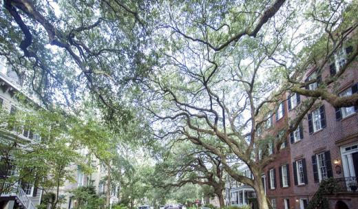 Jones Street in Savannah