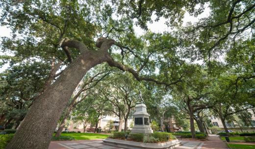 Madison Square Savannah
